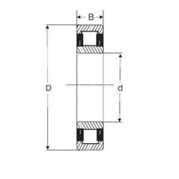 25 mm x 62 mm x 17 mm  25 mm x 62 mm x 17 mm  SIGMA NU 305 cylindrical roller bearings